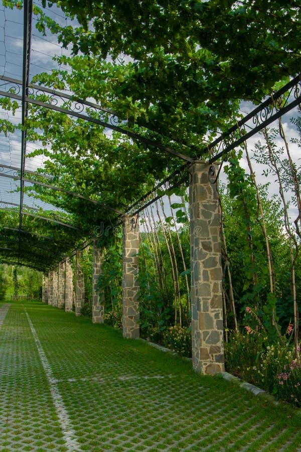 Jardin De Pergola - Arcade Dans Un Jardin Couvert Des Raisins S'élevants Image stock - Image du ...