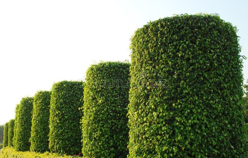Jardin de plante verte image libre de droits