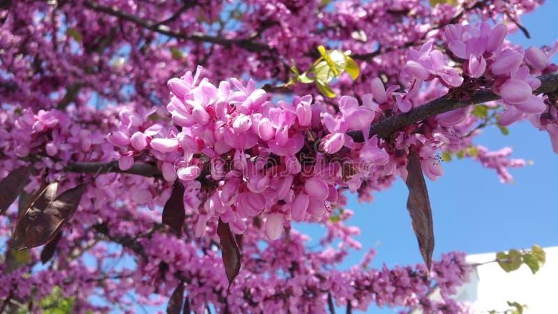 Jardin de plantes et de fleurs d'arbre de l'Espagne photographie stock