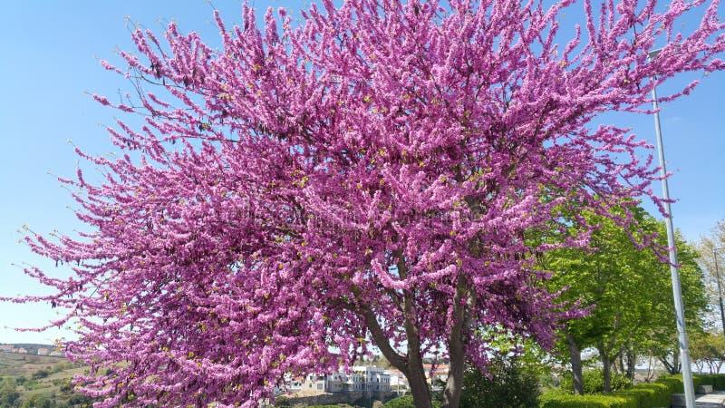Jardin de plantes et de fleurs d'arbre de l'Espagne photo libre de droits