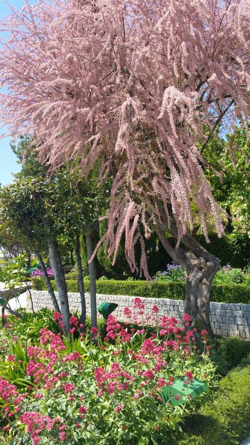 Jardin de plantes et de fleurs d'arbre de l'Espagne image stock