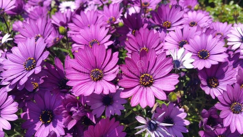 Jardin de plantes et de fleurs de l'Espagne photographie stock