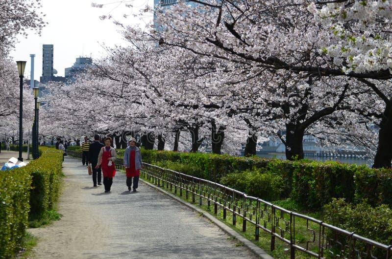 Jardin de Sakura images libres de droits