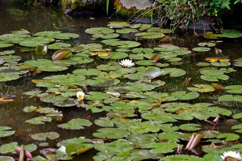 Jardin de Shosei, Kyoto, Japon photo libre de droits