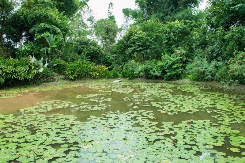 Jardin de style de jungle et étang de lotus photographie stock