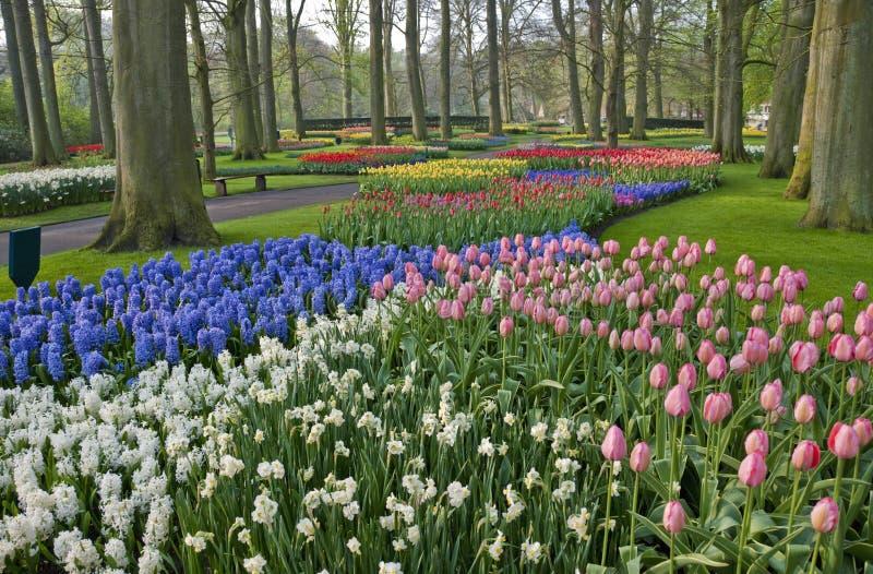 Jardin de tulipe de source de Keukenhof photos libres de droits