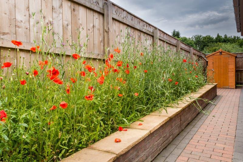 Jardin de Wildflower images libres de droits