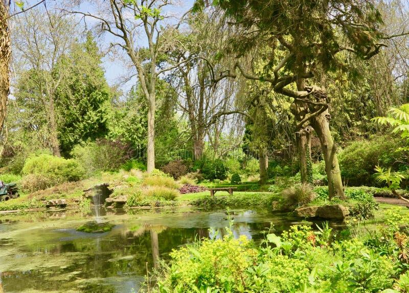 Jardin des arbres image stock