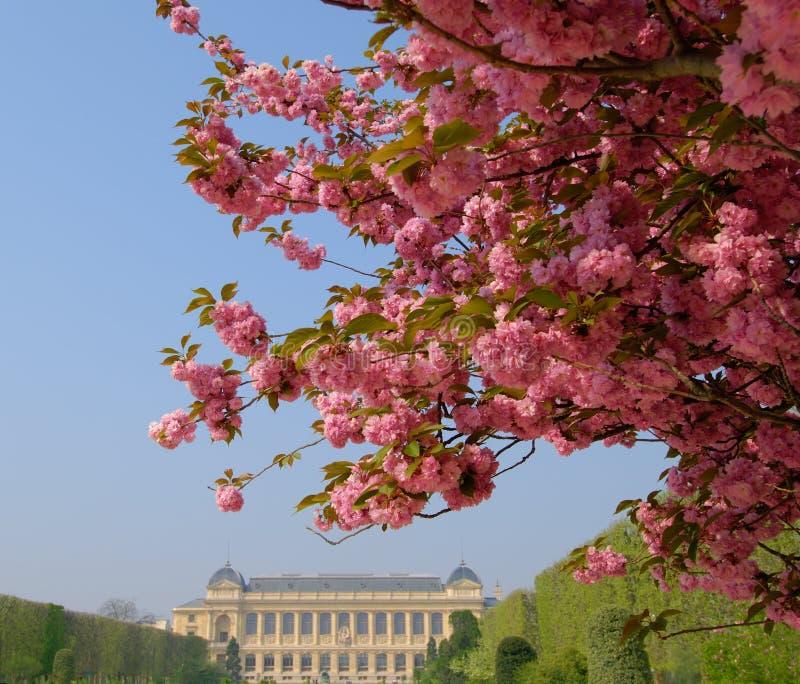 Jardin des Plantes, Paris stock photo