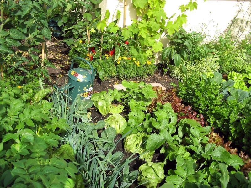 Jardin des verts image libre de droits