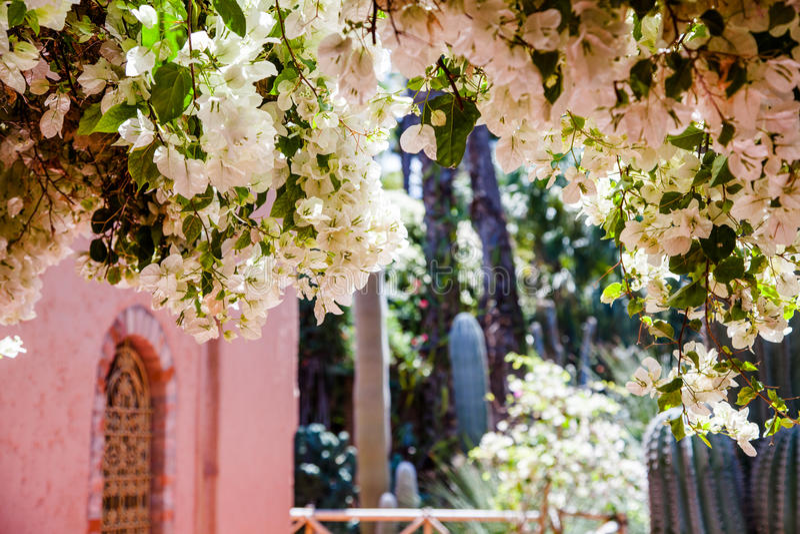 Jardin du Majorelle, Marrakesch lizenzfreie stockbilder