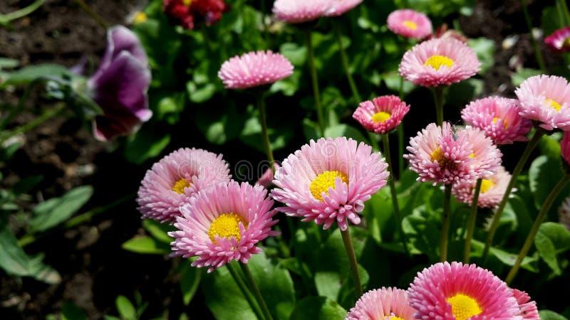 Jardin en été photographie stock libre de droits