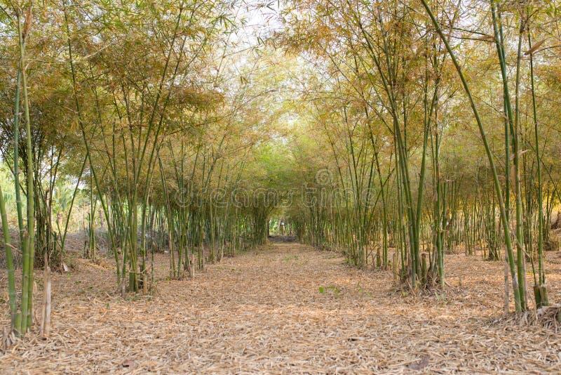 Jardin en bambou images libres de droits