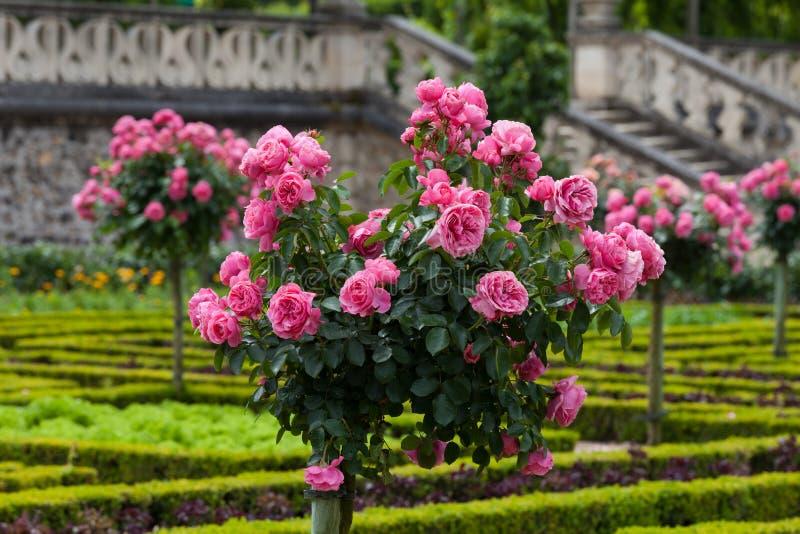 Jardin en Chateau de Villandry. photographie stock