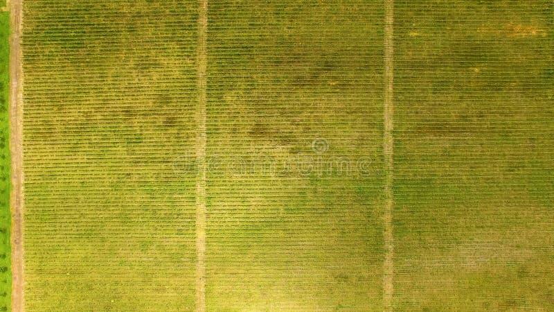 Jardin et vignoble dans la vue aérienne de la Géorgie, plantation de raisin, affaires de ferme photo stock