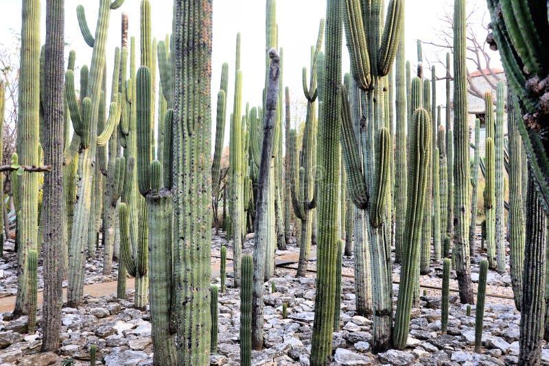 Jardin Etnobotanico Oaxaca Meksyk obrazy royalty free