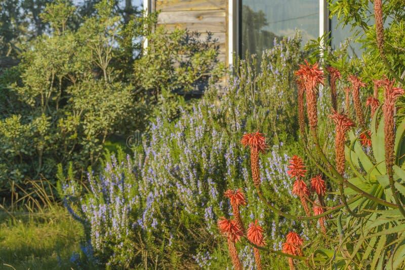Jardin feuillu de Chambre photos libres de droits