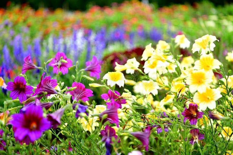 Jardin fleuri coloré, fleurs images stock