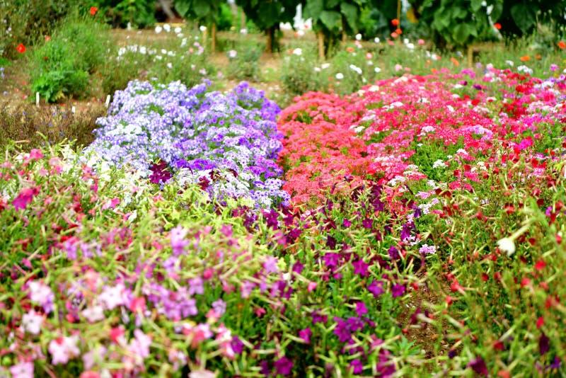 Jardin fleuri coloré, fleurs photo stock