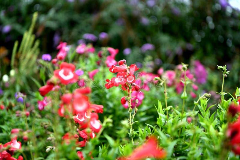 Jardin fleuri coloré, plénitude de fleurs d'été photographie stock libre de droits