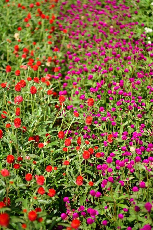 Jardin fleuri coloré, plénitude de fleurs d'été images libres de droits