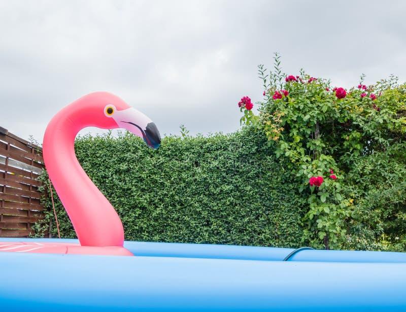 Jardin géant de piscine de flamant image libre de droits