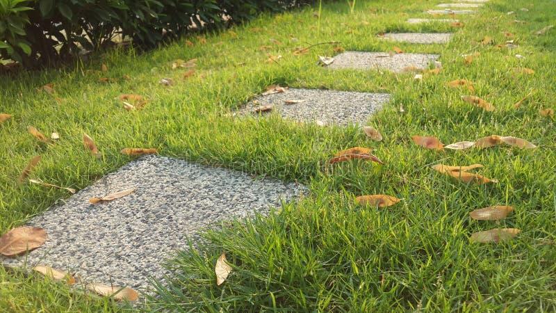 Jardin herbeux image stock