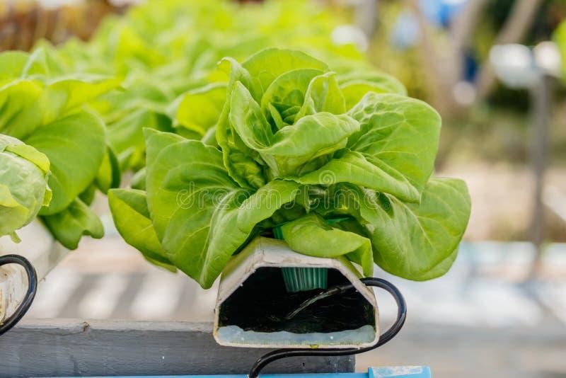 Jardin hydroponique organique de verticale de légumes photo libre de droits