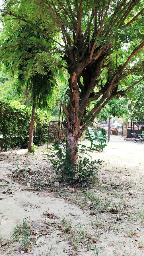 Jardin indien et personnes indiennes photos stock