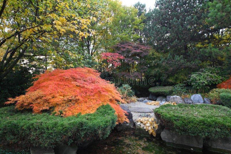 Jardin japonais aménagé en parc images stock