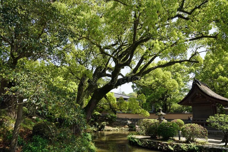 Jardin japonais avec de grands arbres et bâtiments historiques image libre de droits