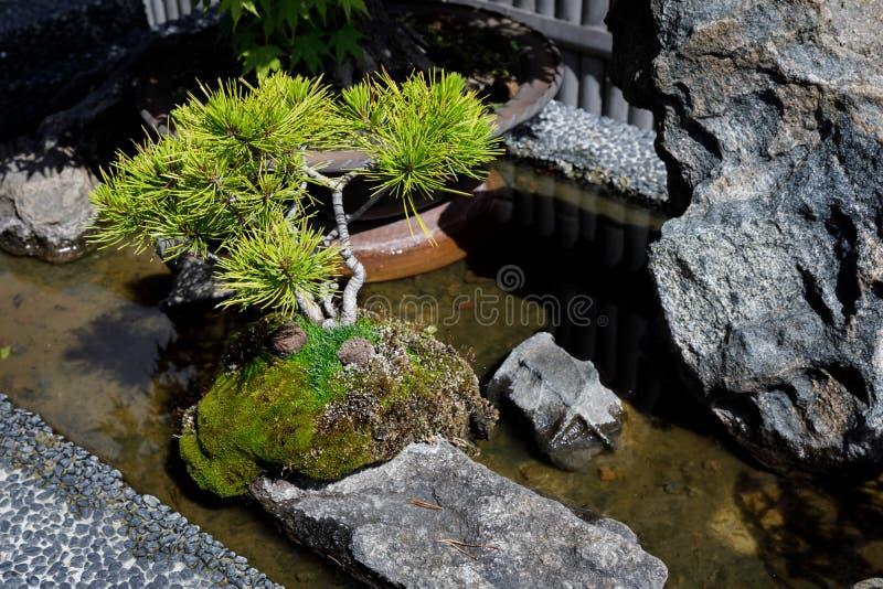 Jardin japonais avec des bonsaïs photos stock
