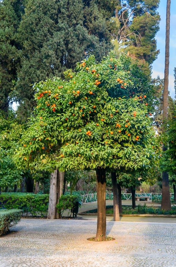 Jardin Jnan Sbil, jardim real em Fes Morroco fotos de stock