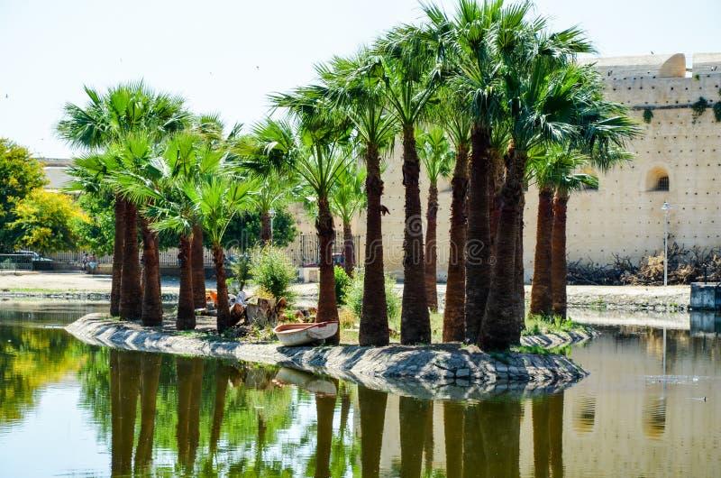 Jardin Jnan Sbil, parque real em Fes com seus lago e palmas elevadas, fez, Marrocos fotos de stock