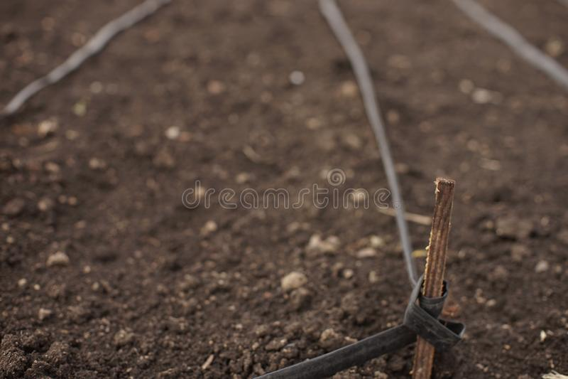 Jardin labouré vide avec les tuyaux faits maison d'irrigation attachés aux lamelles photos libres de droits