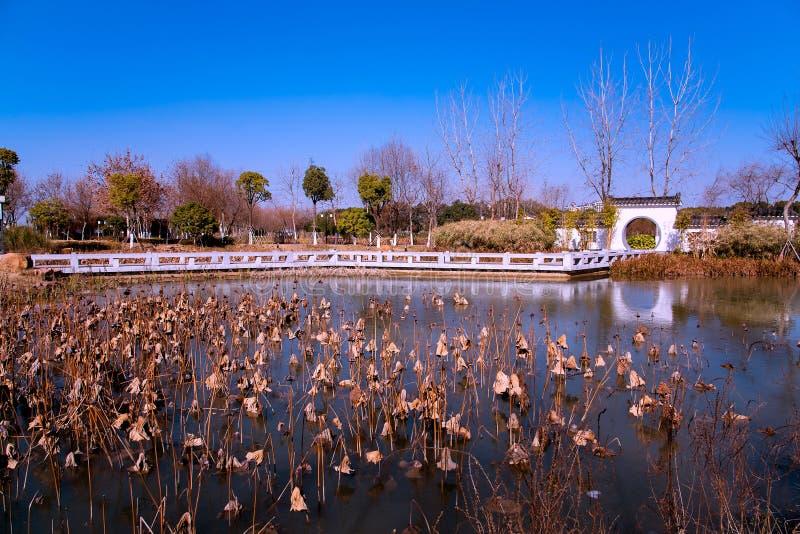 Jardin, lac et loutus image stock
