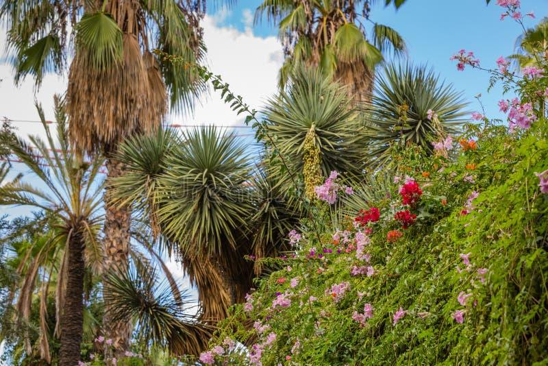Jardin Majorelle στο Μαρακές στοκ εικόνα με δικαίωμα ελεύθερης χρήσης