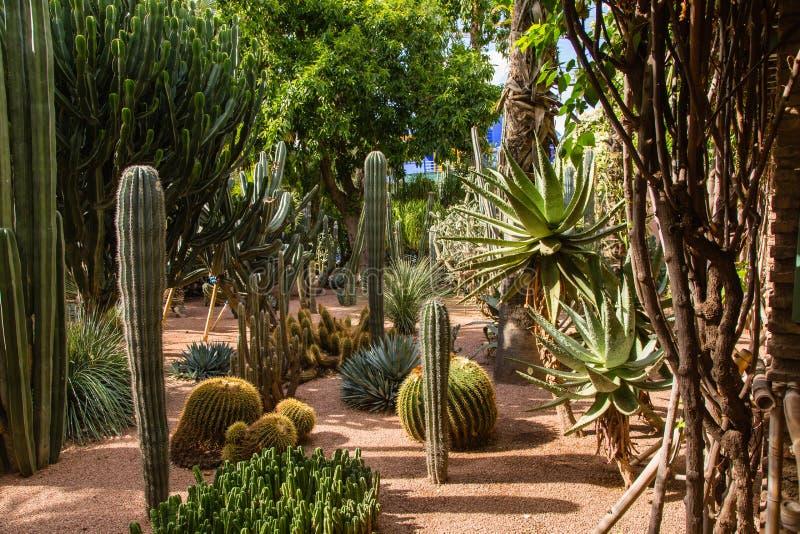 Jardin Majorelle στο Μαρακές στοκ εικόνα