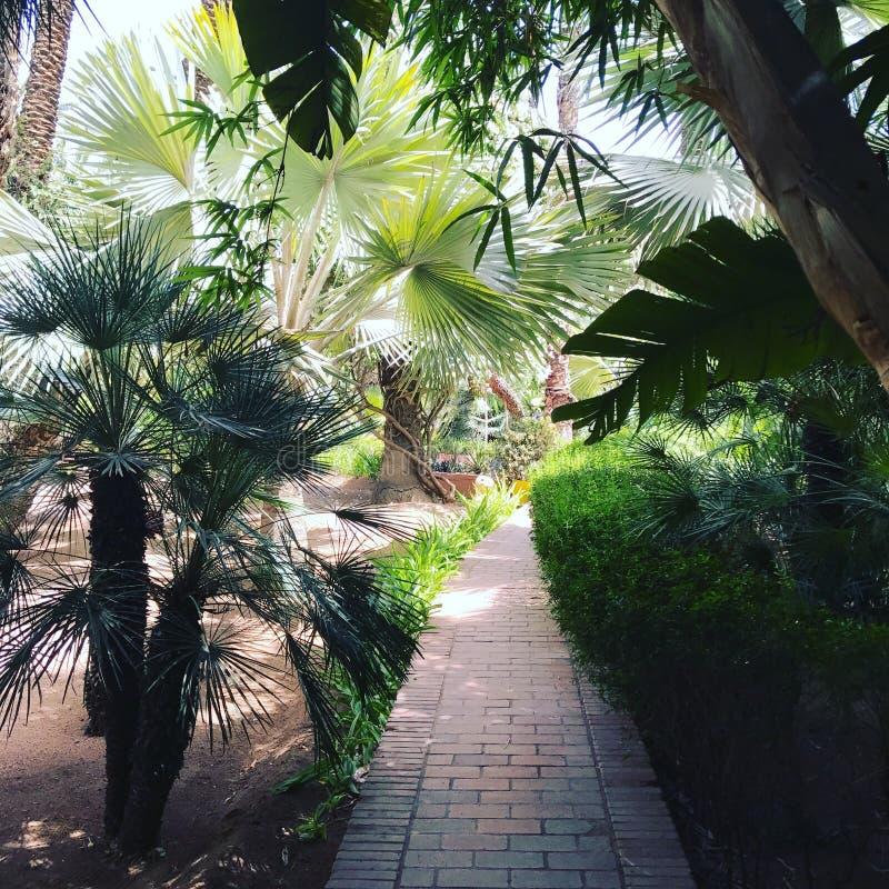 Jardin Majorelle zdjęcia royalty free
