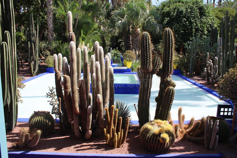 Jardin Majorelle, Marrakech royalty free stock images