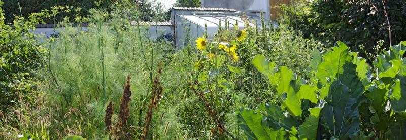 Jardin mal peigné d'agriculteurs images libres de droits
