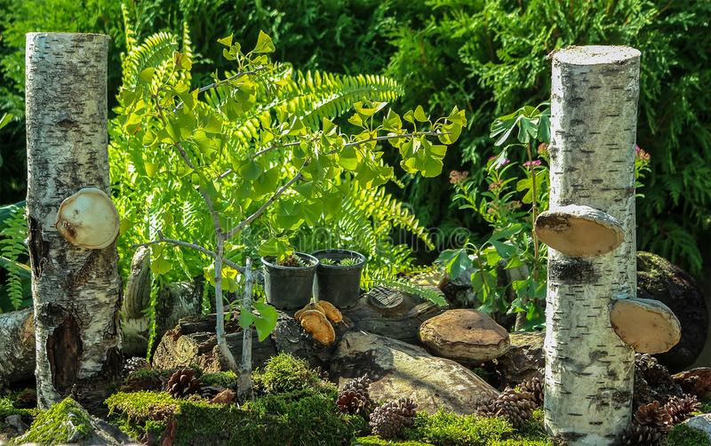 Jardin miniature d'automne images libres de droits