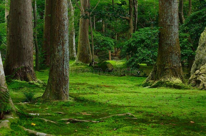 Jardin mousse et arbres japonais kyoto japon image stock - Jardin japonais mousse ...