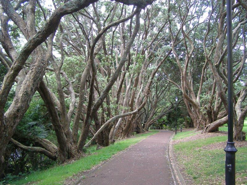 Jardin Nouvelle-Zélande de domaine d'Auckland photo stock