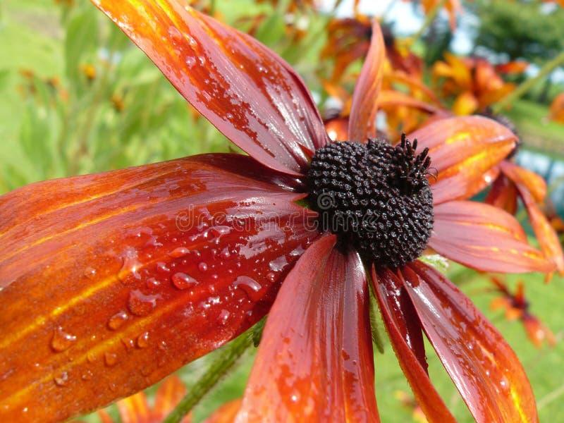 Jardin orange image libre de droits