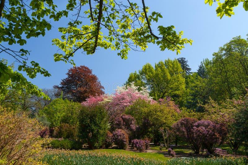 Jardin ou gisement de fleurs d'arbre et de tulipe au printemps photos libres de droits