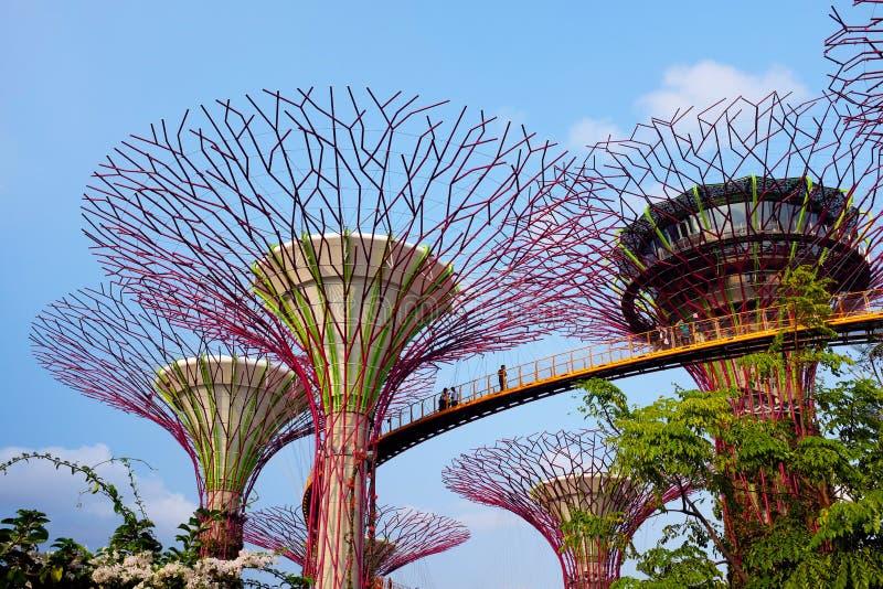 Jardin par la baie à Singapour photo libre de droits
