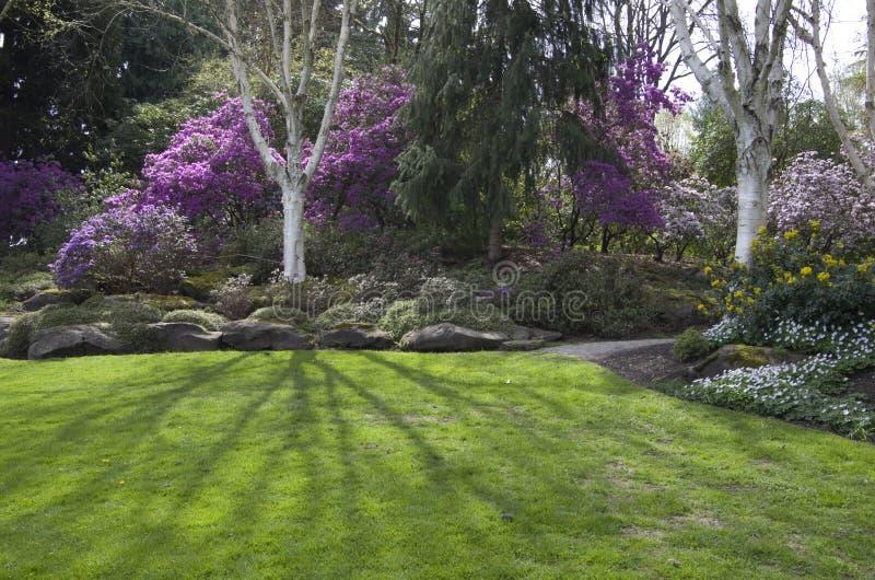 Jardin pourpre de ressort photo stock
