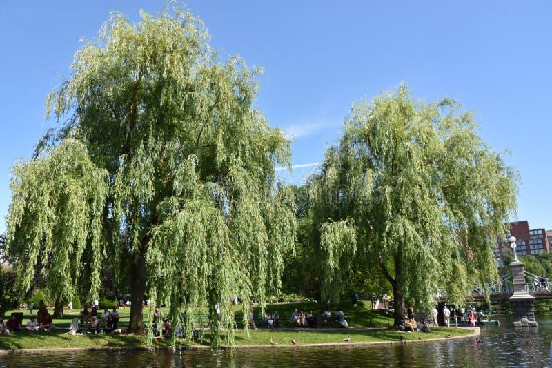 Jardin public à Boston, le Massachusetts image stock