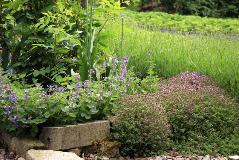 Jardin qui respecte l'environnement de pays photo libre de droits